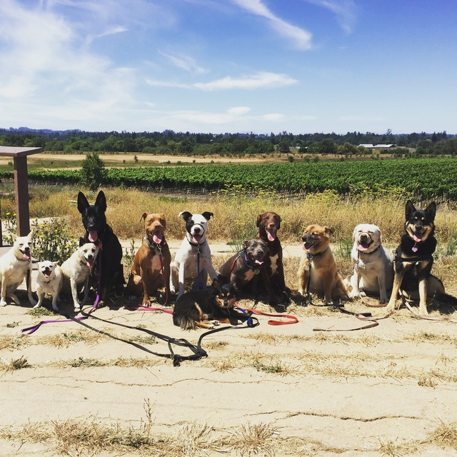 K-9 Concierge, Santa Rosa, CA - Localwise business profile picture