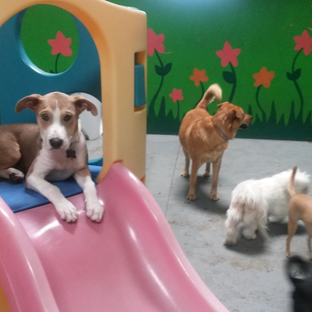 FreePlay Dogs, Concord, CA - Localwise business profile picture