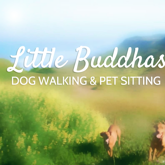 Little Buddhas Dog Walking & Pet Sitting, San Francisco, CA - Localwise business profile picture