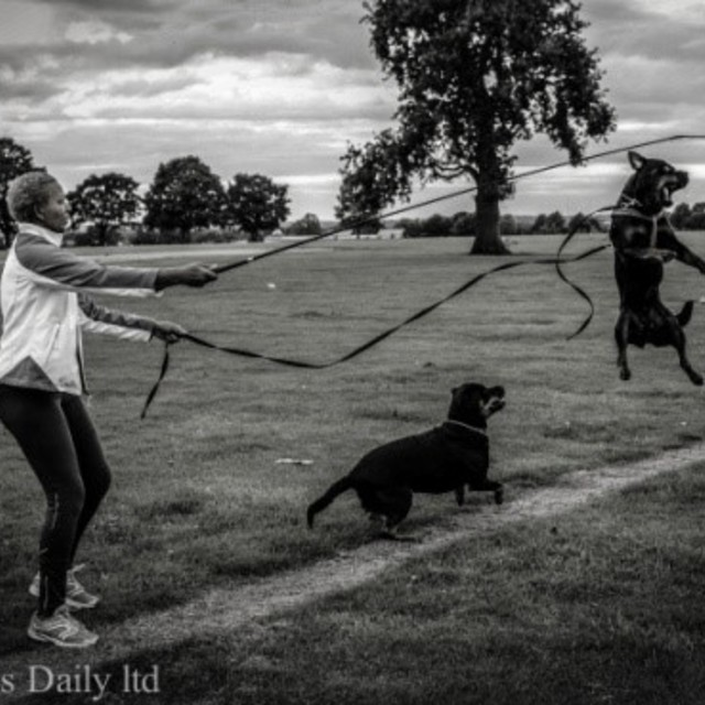 The Dogs Daily, Birmingham, United Kingdom - Localwise business profile picture