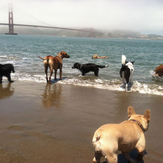 SuperDog City, San Francisco, CA - Localwise business profile picture