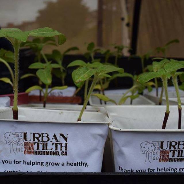 Urban Tilth, Richmond, CA logo