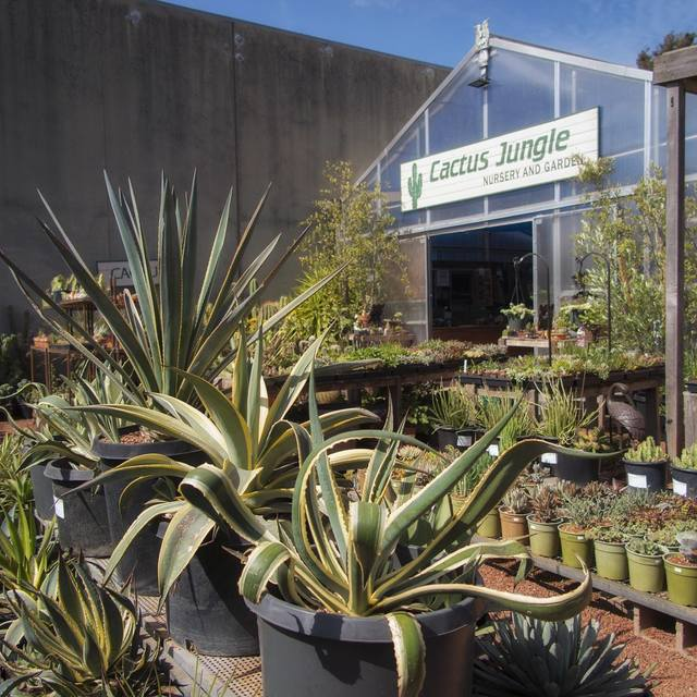 Cactus Jungle Nursery and Garden, San Anselmo, CA - Localwise business profile picture